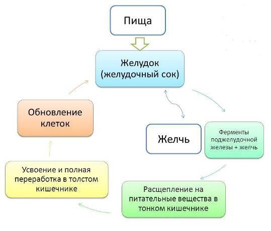pishevaritelnye-fermenty-nsp-kupit