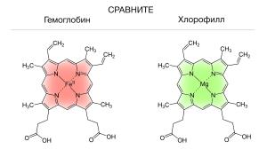 Хлорофилл НСП