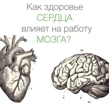 Как здоровье сердца влияет на работу мозга?