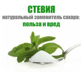 Стевия — натуральный заменитель сахара: польза и вред